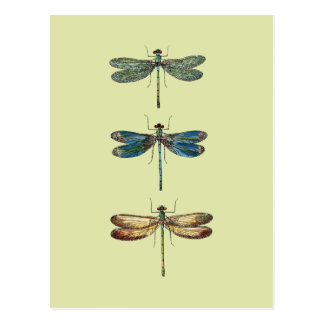 Postal Ejemplos de la libélula