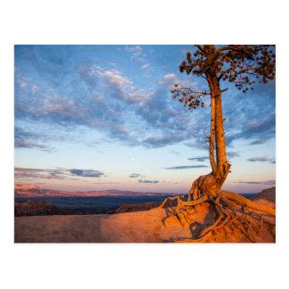 Postal El árbol se aferra en la repisa, parque nacional