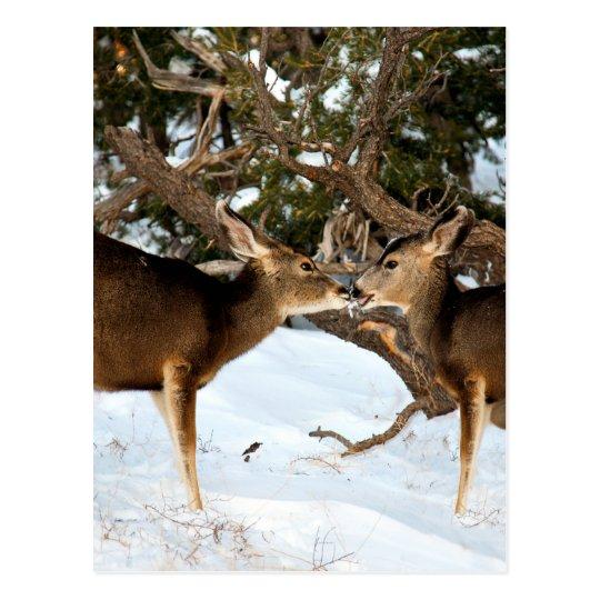 Postal El besarse de dos ciervos