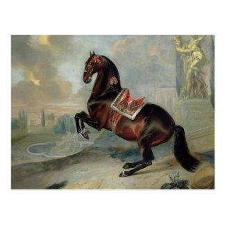 Postal El caballo de bahía oscuro 'Valido