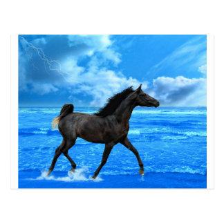 Postal El caballo de mar