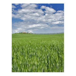 Postal El campo y la impulsión de trigo alinearon por el