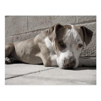 Postal el corazón de un perro de Bullie