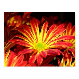 Postal El crisantemo rojo y amarillo florece