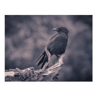 Postal El cuervo de observación