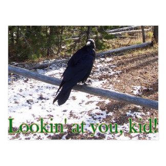 Postal El cuervo hambriento de Yellowstone