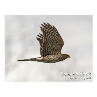 Postal El halcón del tonelero