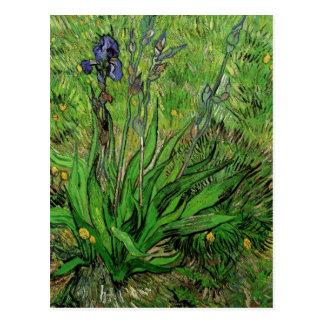 Postal El iris de Vincent van Gogh