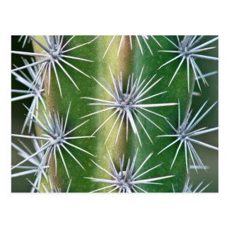 Postal El jardín botánico de Huntington, cactus del pulpo