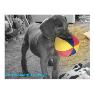 Postal El jugar azul del perrito de Weimaraner