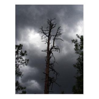 Postal El lago lynx, Arizona, es un depósito de 55 acres