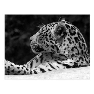 """Postal """"El leopardo el despertar """""""
