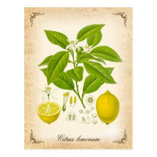 Postal El limón - ejemplo del vintage