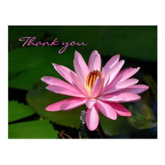 Postal el lirio de agua rosado le agradece