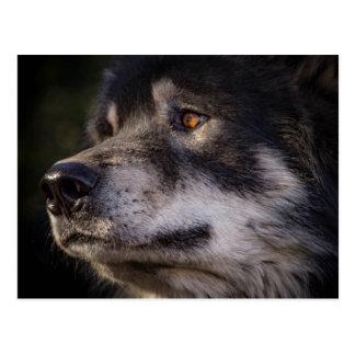 Postal El lobo