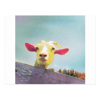 Postal El más grande de todos cabra espigada rosada del