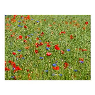 Postal El mit de Sommerfeld roten el und blauen Blumen
