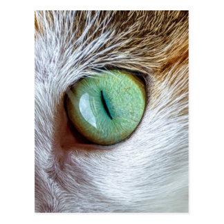 Postal El ojo de gato verde hermoso que cautiva