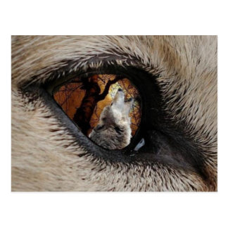 Postal El ojo del lobo