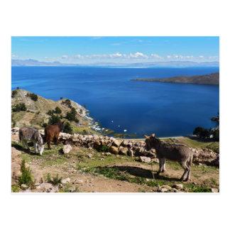 Postal El paraíso de los burros