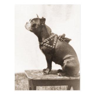 Postal El perro se sienta para una imagen