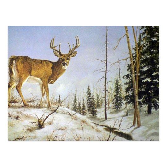 Postal El pico de Jay, ciervo de la cola blanca