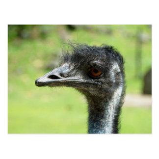 Postal El ` principal tiró de Emus en el parque zoológico