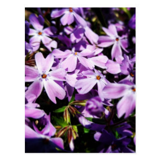 Postal El remiendo púrpura de la flor