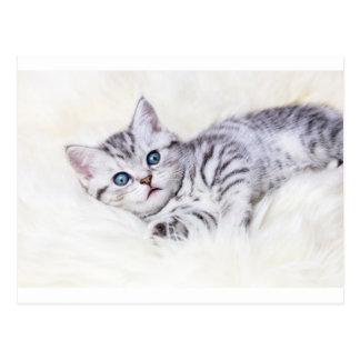 Postal El tabby de plata joven manchó el gato que mentía