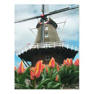 Postal El tiempo del tulipán de Holanda florece el molino