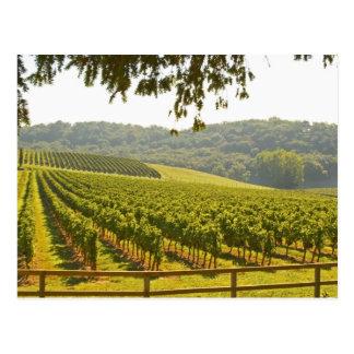 Postal El viñedo y un valle con un bosque -