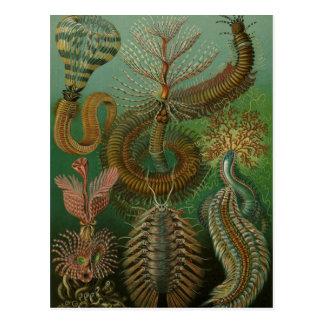 Postal El vintage Worms los anélidos Chaetopoda de Ernst