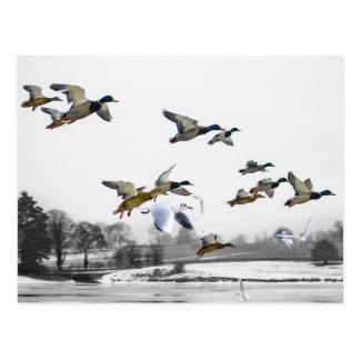 Postal El volar de los patos