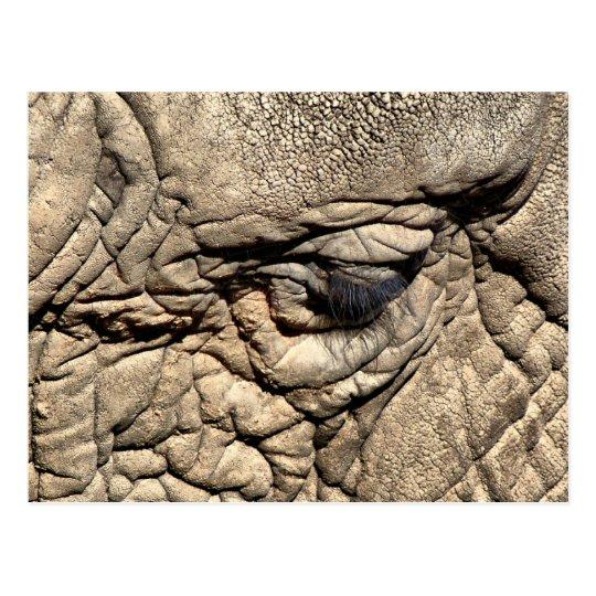 Postal Elefante africano