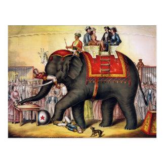 Postal Elefante del circo del vintage