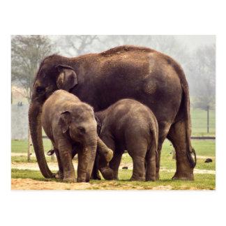Postal Elefantes