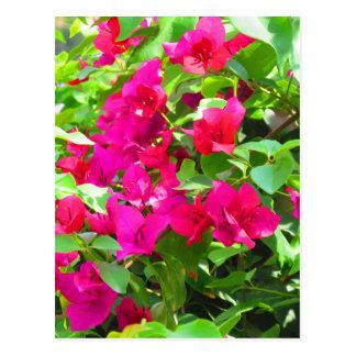 Postal Emblema floral del bougainvillea de la flor del