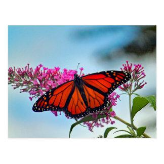 Postal en blanco de la mariposa de monarca 5273