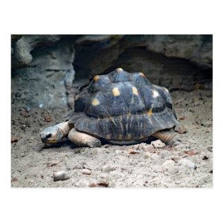 Postal en blanco de la tortuga 7166