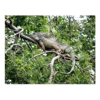 Postal En Monagas de la iguana