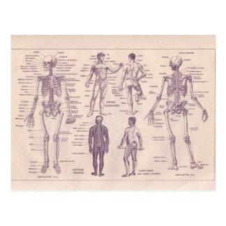 Postal Enciclopedia francesa 1920, anatomía humana