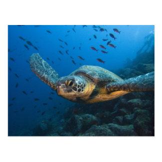 Postal Ennegrezca la tortuga (verde) (agassizi del