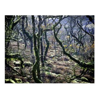 Postal Ennegrezca un Copse del Tor, Dartmoor, Devon,