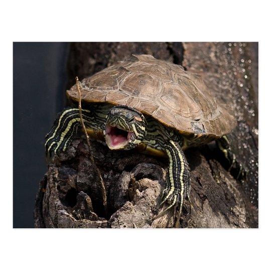 Postal enojada de la tortuga