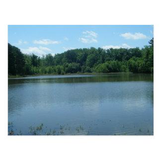 Postal Ensenada de Bosque verde del lago