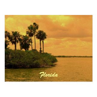 Postal Ensueño de la palmera de la Florida