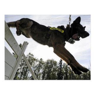 Postal Entrenamiento del perro policía del pastor alemán