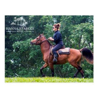 Postal Equitación de Terry en los establos Belice de