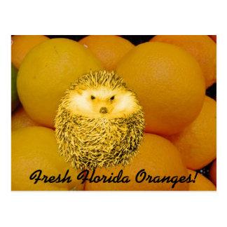 Postal Erizo anaranjado fresco