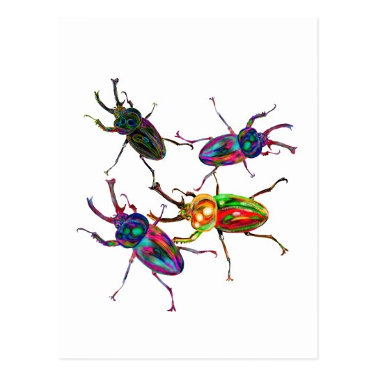Postal Escarabajos de macho frescos extraños del arco